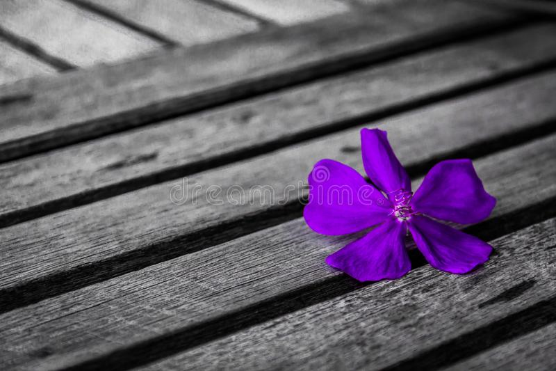 Purpura kwiat na drewnianym stole fotografia royalty free