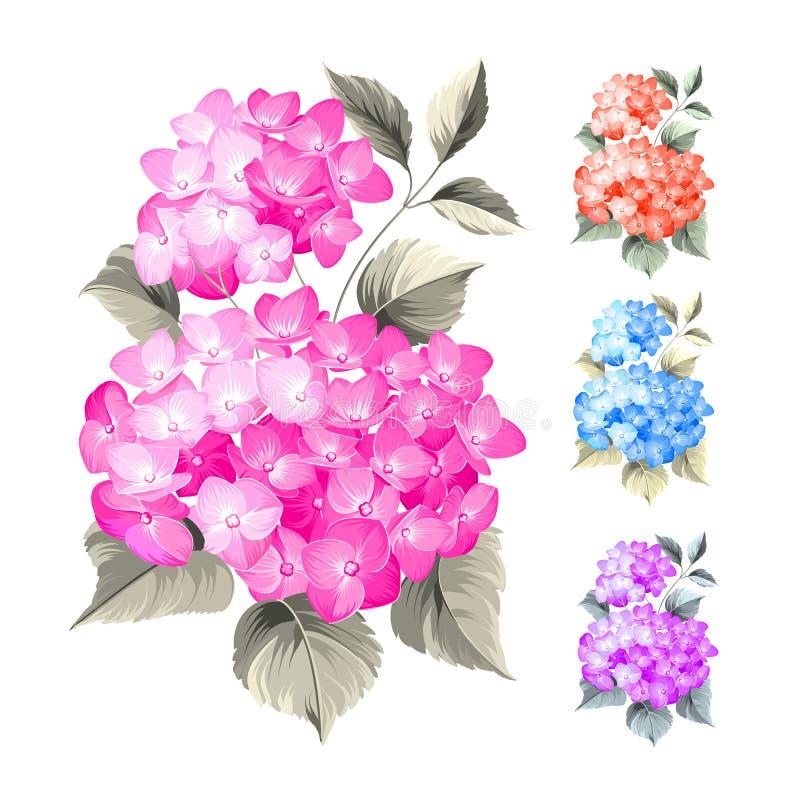 Purpura kwiatu hortensja royalty ilustracja