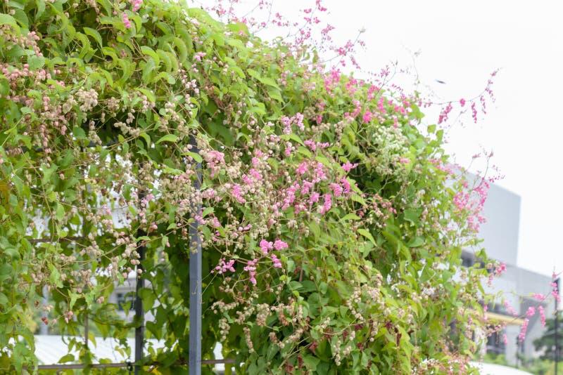 Purpura kwiatu liście i pergola obraz stock