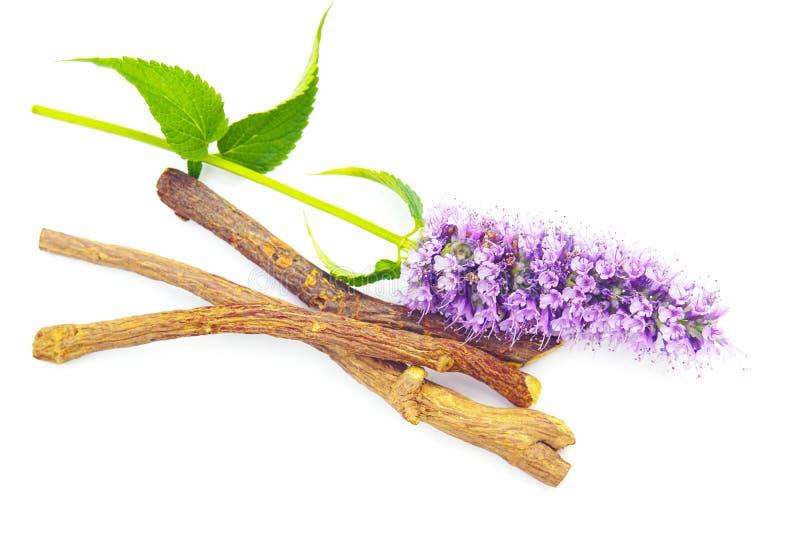 Purpura kwiatu likworu korzeni kijów Agastache różowego błękitnego ogródu zielarski lukrecjowy likwor odizolowywający na bielu zdjęcia royalty free