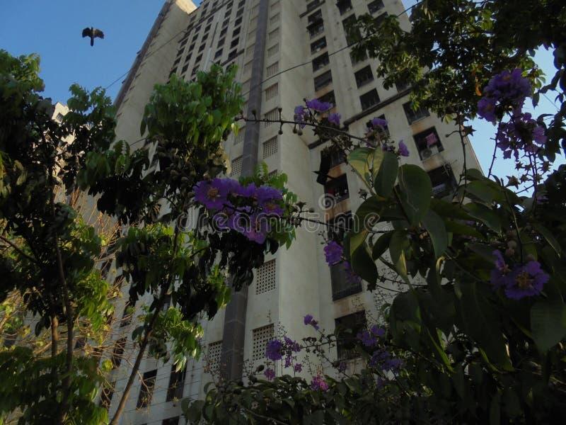 Purpura kwiatu roślina obrazy stock