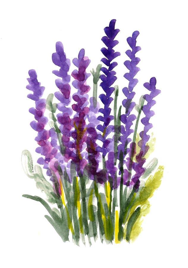 Purpura vattenfärgblommor stock illustrationer
