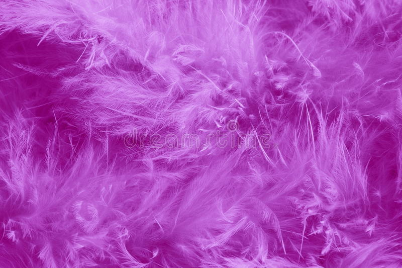 Purpurfärgad bakgrund för fjädrar - romantiska materielbilder royaltyfri fotografi