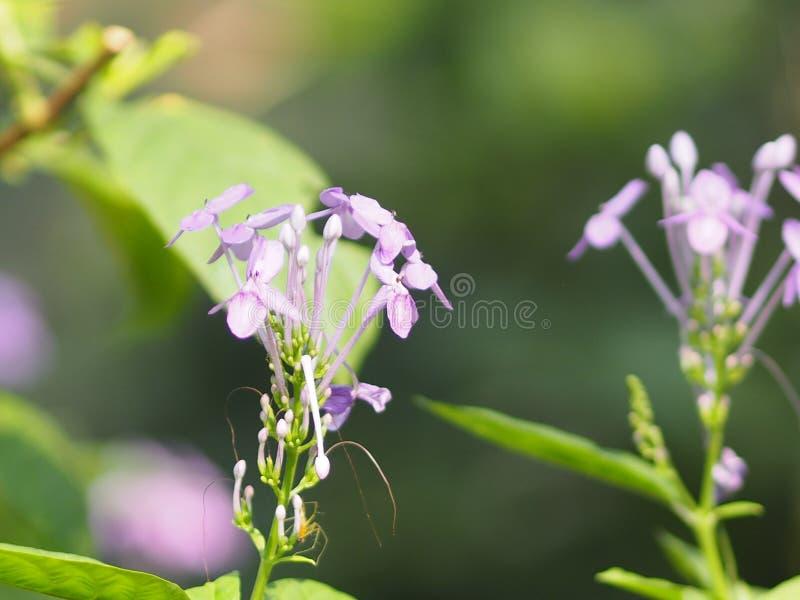 Purpurfärgad blomma på den härliga naturen för suddighetsbakgrund arkivfoto
