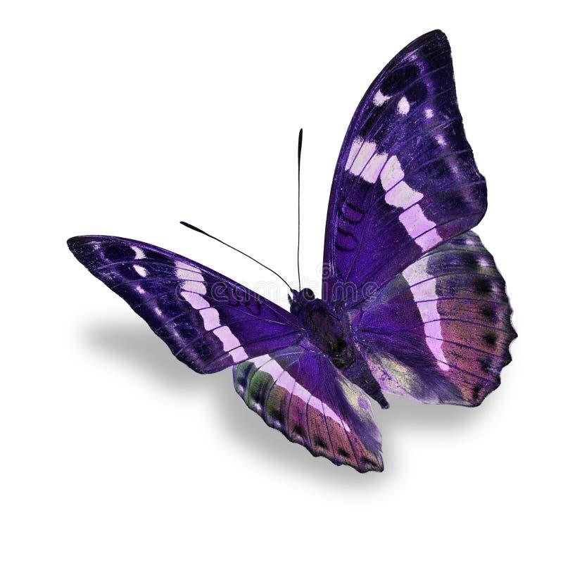 Purpurfärgad fjäril royaltyfria bilder
