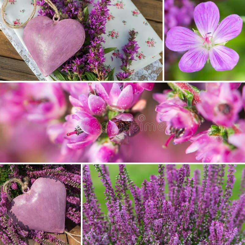 Purpurfärgad höst royaltyfri fotografi