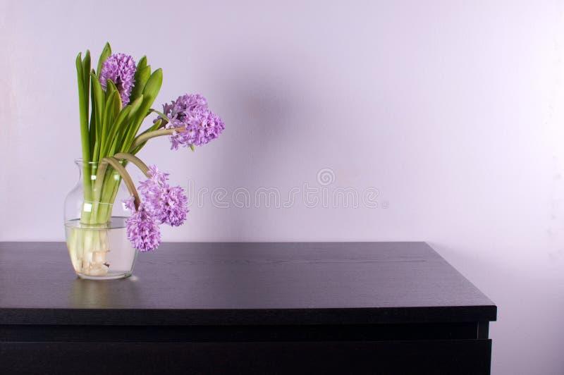 Purpurfärgad hyacint i den glass vasen på svart bröstkorg arkivbild