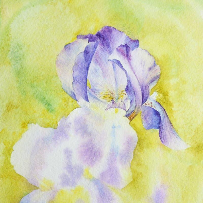 Purpurfärgad iris på en gul bakgrund Fragment av vattenfärgdrawien stock illustrationer