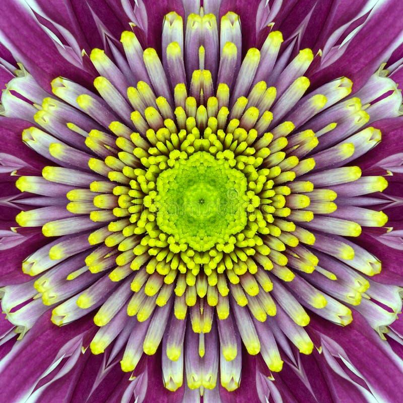 Purpurfärgad koncentrisk blommamitt. Mandala Kaleidoscopic design fotografering för bildbyråer