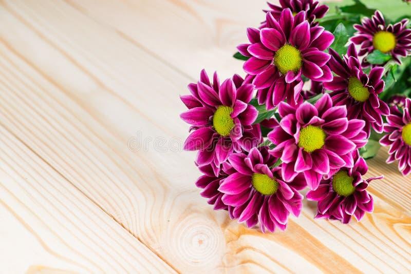 Purpurfärgad krysantemum på en träbakgrund royaltyfri foto