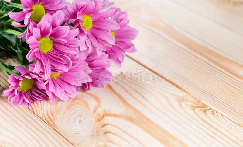 Purpurfärgad krysantemum på en träbakgrund royaltyfri bild