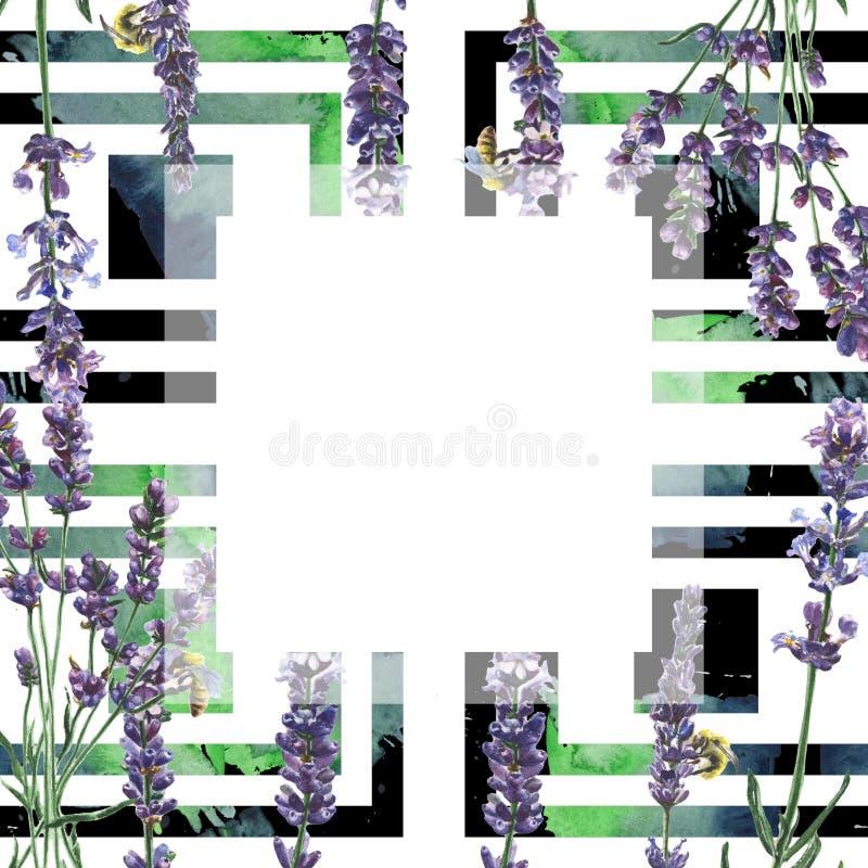 Purpurfärgad lavendel Blom- botanisk blomma Fyrkant för ramgränsprydnad royaltyfria foton