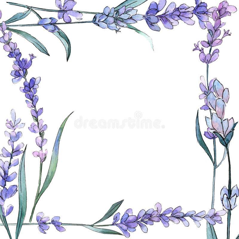 Purpurfärgad lavendel Blom- botanisk blomma Lös vårbladvildblomma Fyrkant för ramgränsprydnad royaltyfri illustrationer