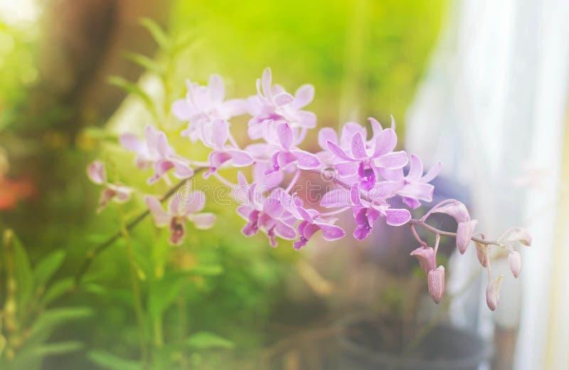 Purpurfärgad orkidéblomma för mjuk suddighet i trädgård arkivbilder