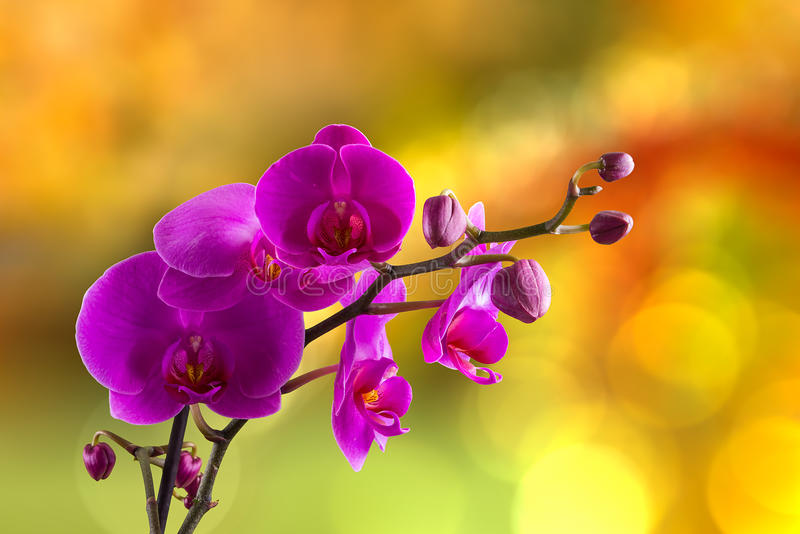 Purpurfärgad orkidéblomma på suddighetsbakgrund arkivbild