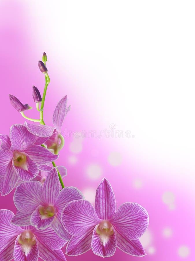 Purpurfärgad orkidéfilial med abstrakt bokehbakgrund royaltyfri fotografi