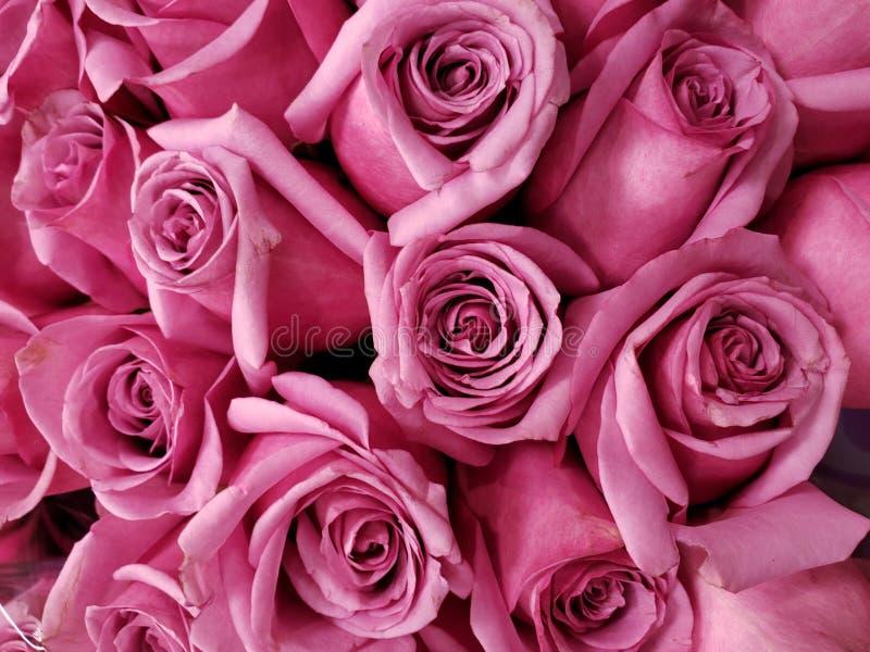 purpurfärgad rosa blomma i en blom- bukett för gåva av förälskelse, bakgrund och textur arkivbilder