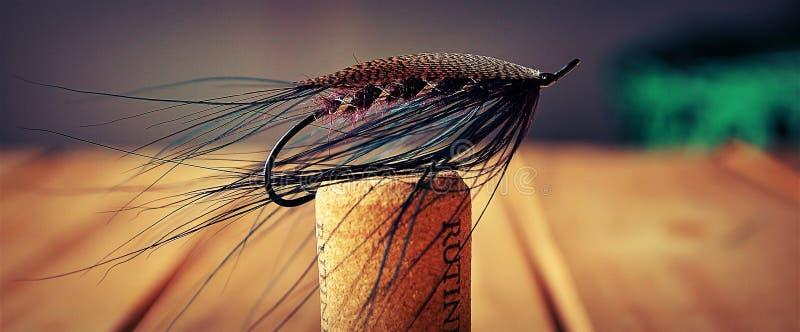 Purpurfärgad Spey fluga royaltyfri fotografi