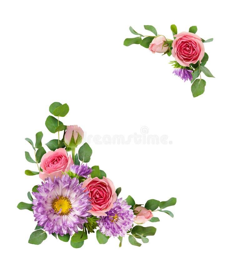 Purpurfärgade aster och rosa färgrosen blommar med eukalyptussidor i a vektor illustrationer