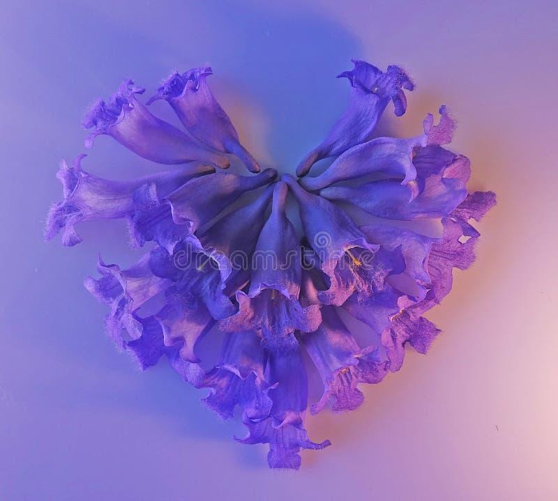 Purpurfärgade blommor för jakaranda som bildar en bild för makro för hjärtaformcloseup royaltyfria foton