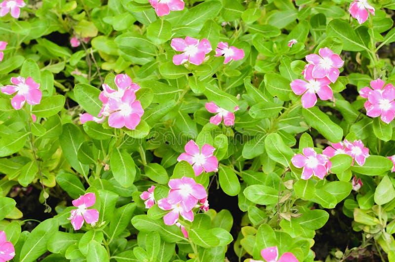 Purpurf?rgade blommor i sommar?ng fotografering för bildbyråer