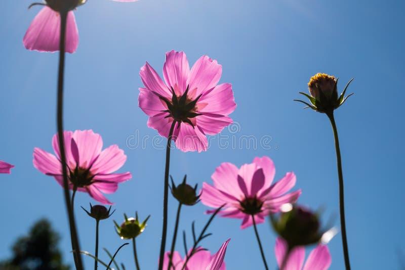 Purpurfärgade blommor på blå himmel arkivfoto