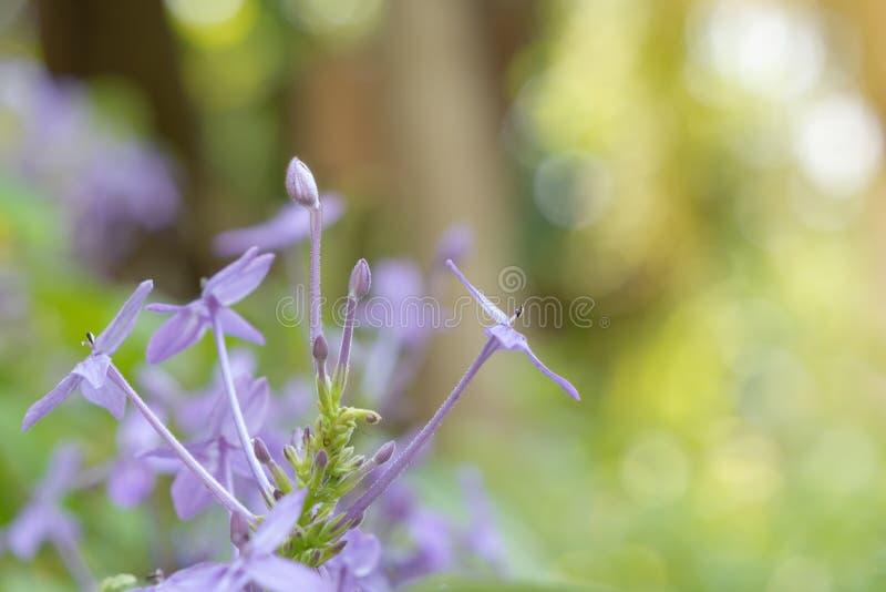 Purpurfärgade blommor på bokeh och suddiga bakgrunder royaltyfria foton