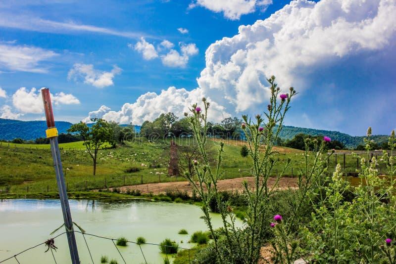 Purpurfärgade blomningtistlar längs ett staket Landscape arkivbilder