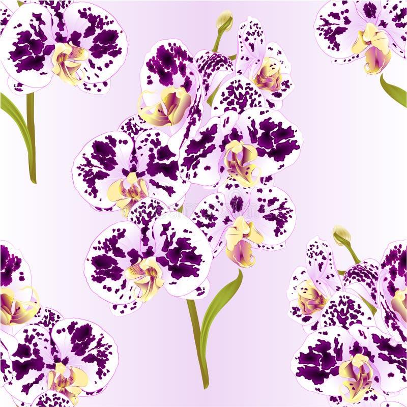 Purpurfärgade för sömlös Phalaenopsis för texturfilialorkidé prickiga och vita blommor och tropiska växter stam och knoppar för s stock illustrationer