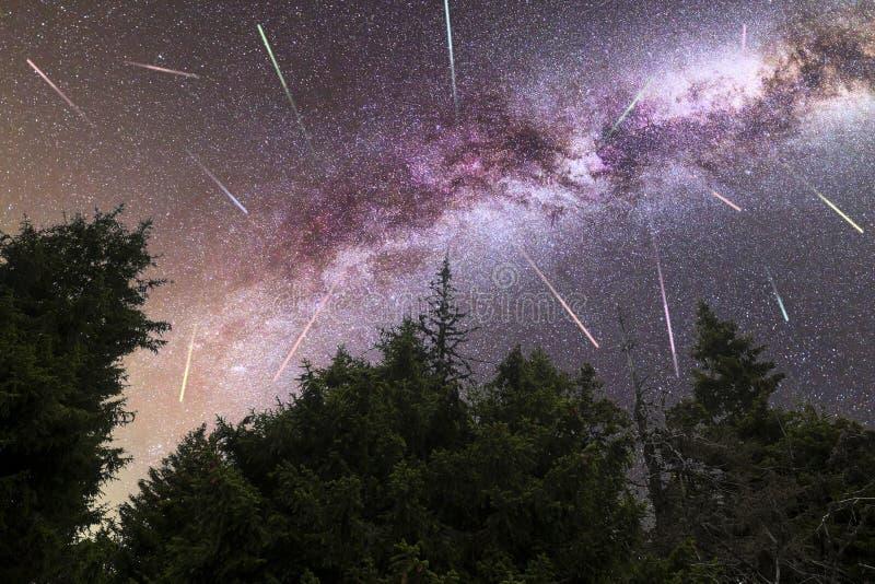 Purpurfärgade fallande stjärnor för mjölkaktig väg sörjer trädkonturn royaltyfri bild