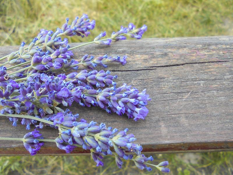 purpurfärgade lavendelblomningar är på det gamla träbrädet royaltyfria foton