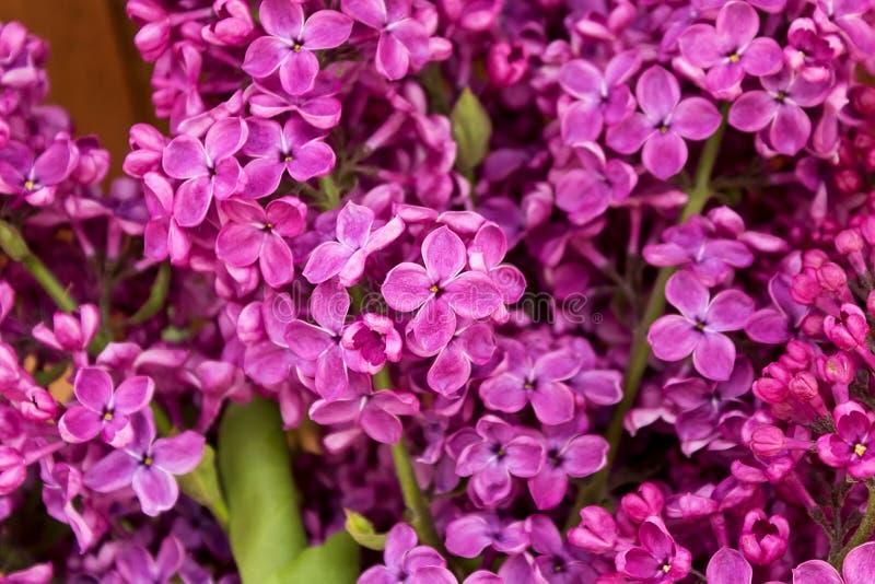 Purpurfärgade lilablommor som en bakgrund arkivfoto