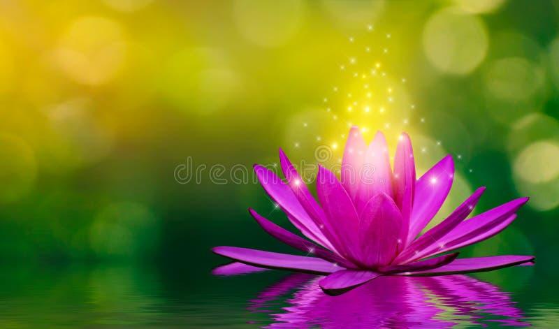 Purpurfärgade lotusblommablommor sänder ut ljus som svävar i vattnet, naturlig grön bokehbakgrund royaltyfri bild