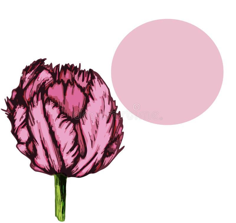 Purpurfärgat hälsningkort för tulpan med benet background-03 royaltyfri illustrationer