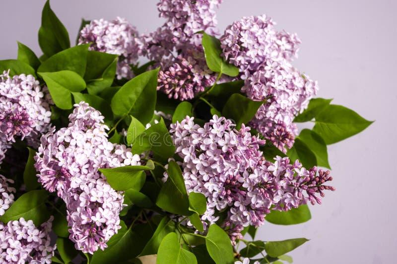 Purpurfärgat lila blomma för bukett Bush av blommor royaltyfri bild