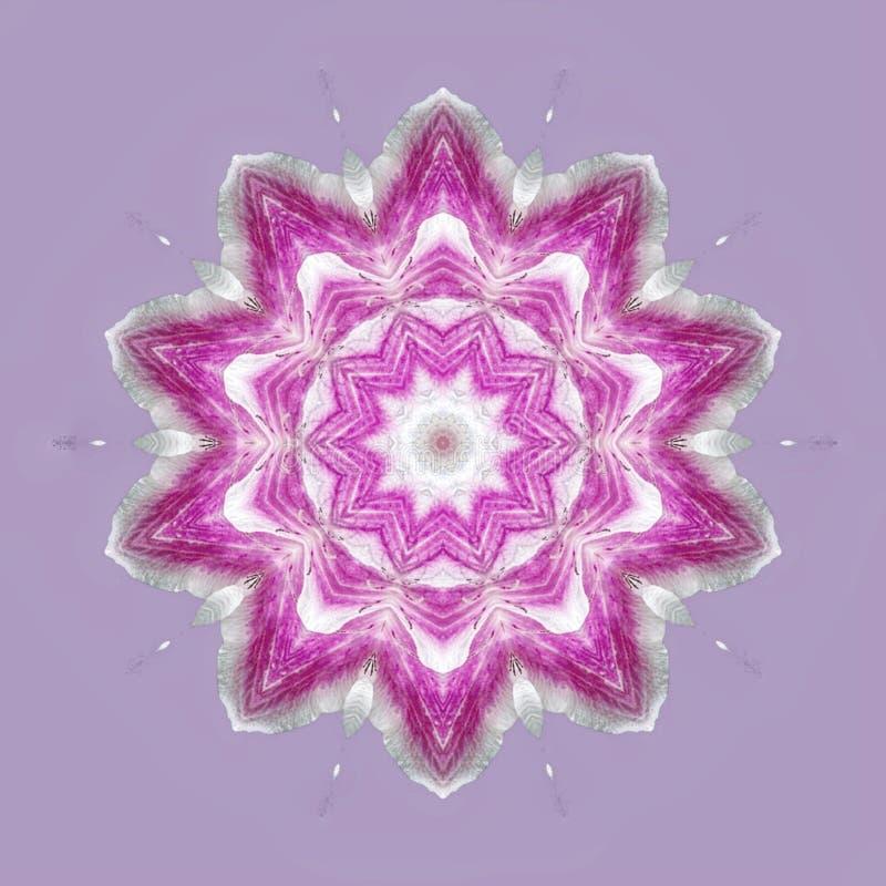Purpurf?rgade blommor i mandala arkivfoto