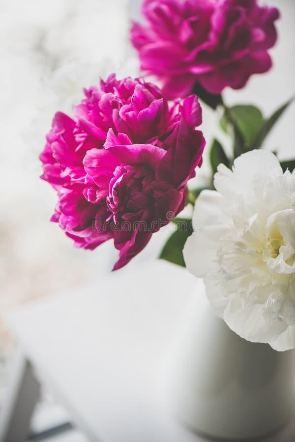 Purpurowa i biała peonia kwitnie w wazie zdjęcie royalty free