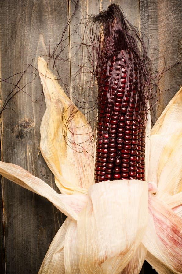 Download Purpurowa kukurudza zdjęcie stock. Obraz złożonej z odżywczy - 53789404
