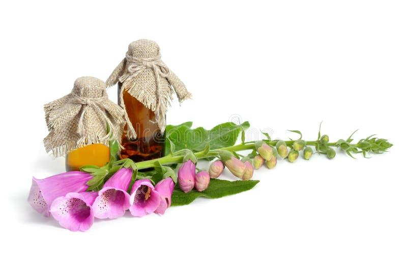 Purpurowa naparstnica z farmaceutyczną butelką zdjęcie stock