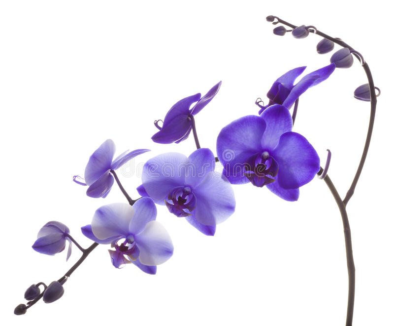 Purpurowa orchidea zdjęcia royalty free