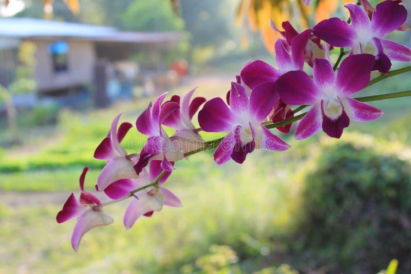 Purpurowa orchidea zdjęcia stock
