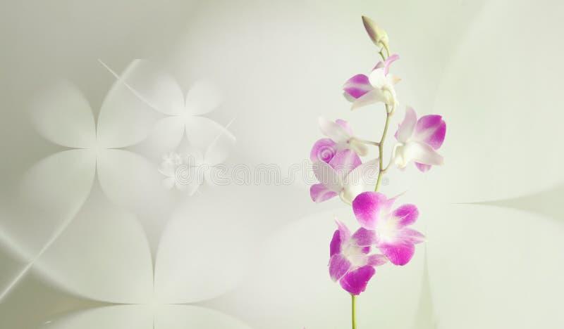 Purpurowa orchidea kwitnie na kwiecistym tle obraz royalty free