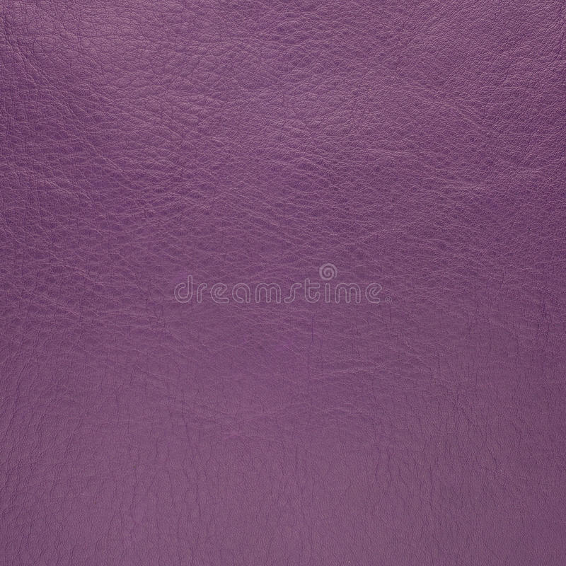 Purpurowa skóra obraz royalty free