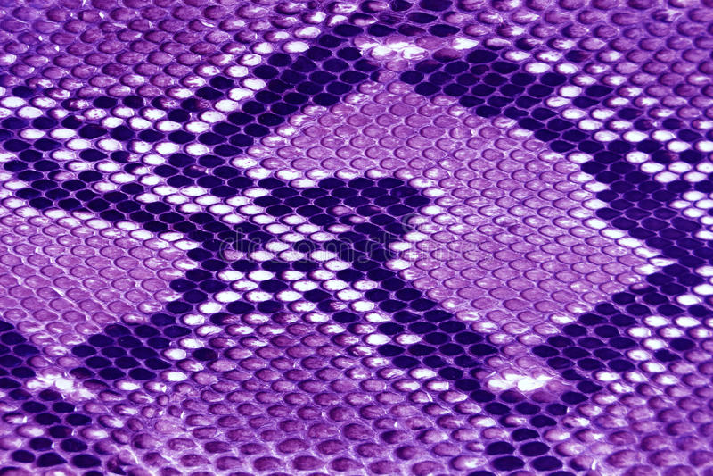 purpurowa tekstury skóra zdjęcie royalty free