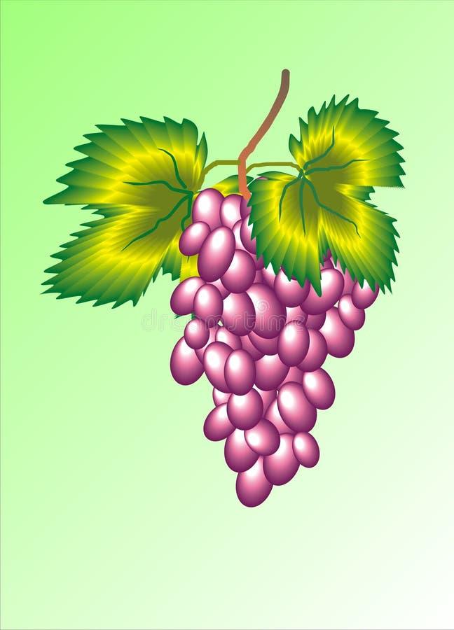 Purpurowa wiązka winogrona zdjęcie stock