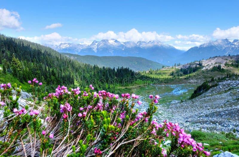 Purpurowa wysokogórska wrzosu i góry dolina fotografia stock