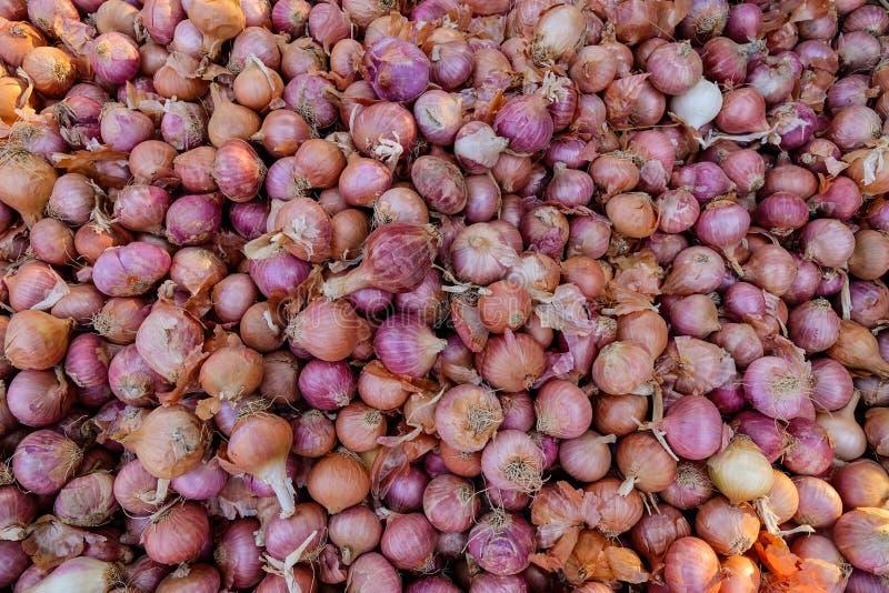 Purpurowe cebule na miejscowego rynku obrazy royalty free