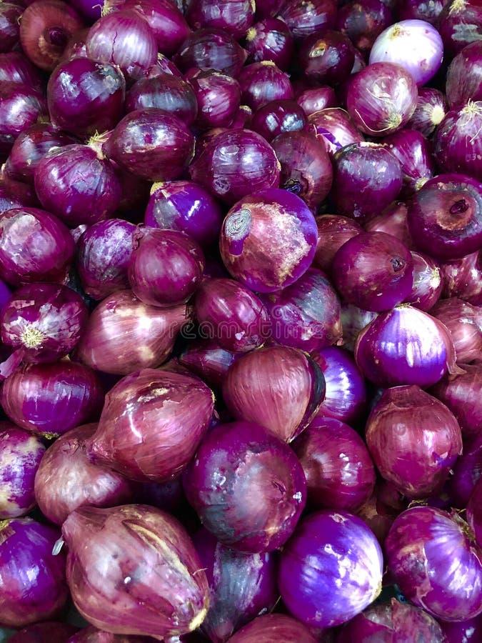 purpurowe cebuli obraz stock