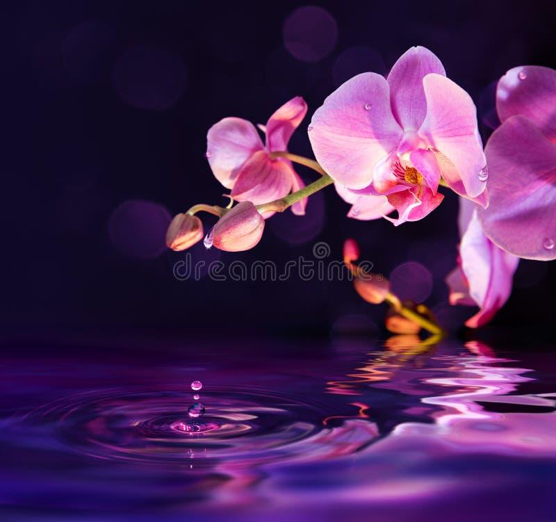 Purpurowe orchidee i krople w wodzie fotografia stock