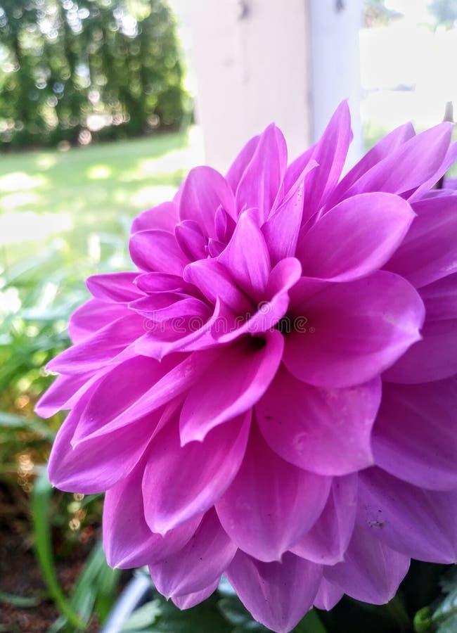Purpurowe warstwy zdjęcia royalty free